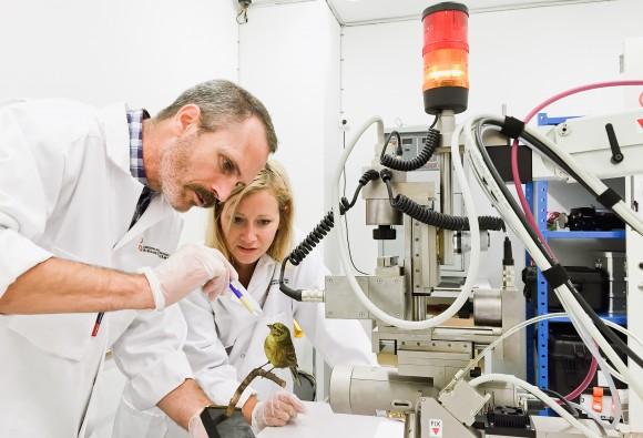 Undersökning av ett objekt från en naturhistorisk samling med hjälp av röntgenfluorescensinstrument.