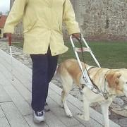 Ledarhund vid Glimmingehus. Bilden är beskuren.
