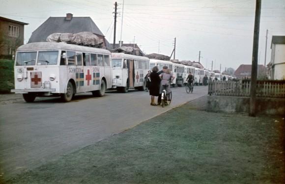 Folke Bernadotte och Röda korsets vita bussar på rad.