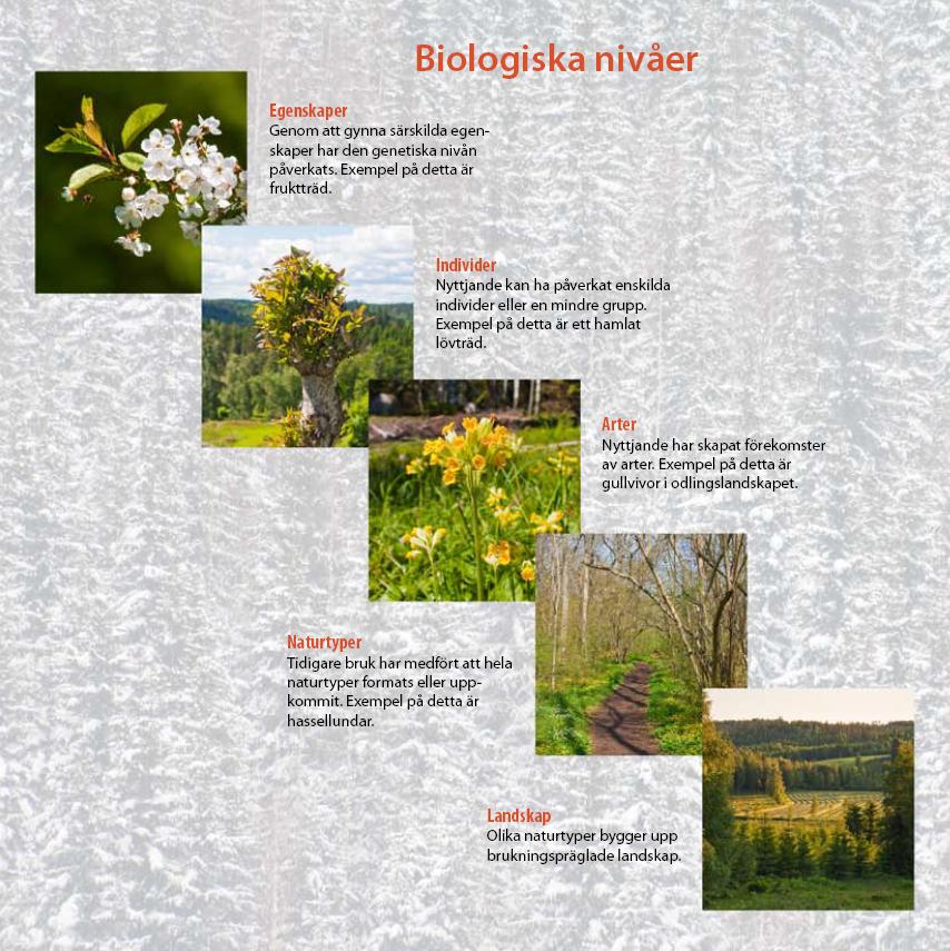 Biologiskt kulturarv i olika nivåer, ur Riksantikvarieämbetets broschyr Levande spår i skogen.