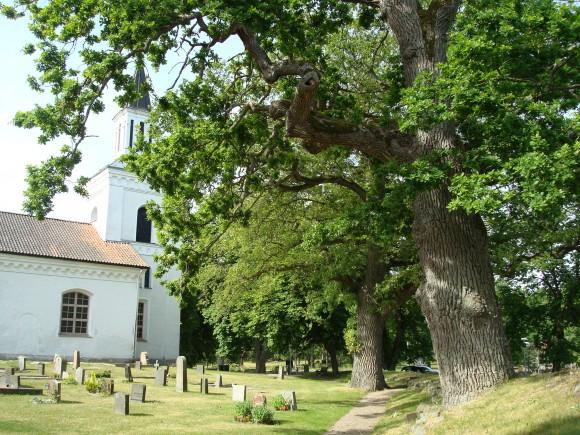 Gamla ekar på Förkärla kyrkogård, Blekinge län.