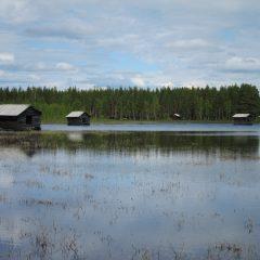 Äldre kulturlandskap: Svansele dammängar i Västerbotten.