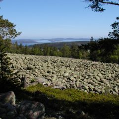 I förgrunden ett klapperstensfält inramat av tallar. I bakgrunden skymtar hav och öar bakom en ridå av barrträd