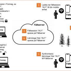Arbetsflöde för registrering i Fältreg.
