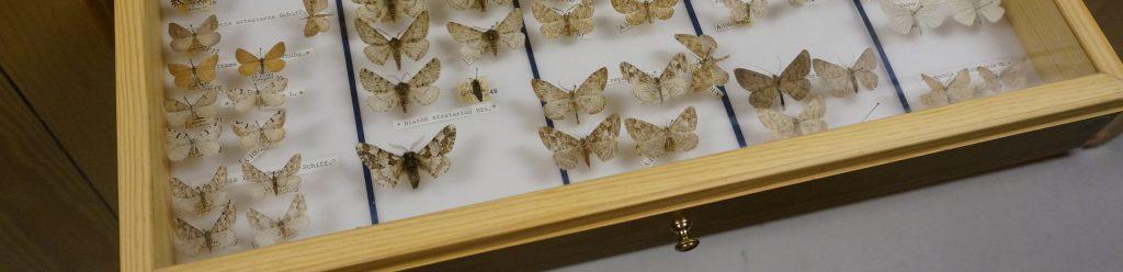 Fjärilssamling i utdragbar låda