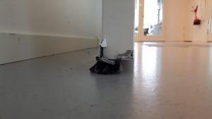 Bild på en remsa med borst i nederkant på en dörr, för att hindra smuts och skadedjur att komma in i ett rum, speciellt om det finns en glipa under dörren.