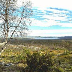 Här syns myren vid Flatruet-Ruvallen. Hällristningar vittnar om platsens forna betydelse.
