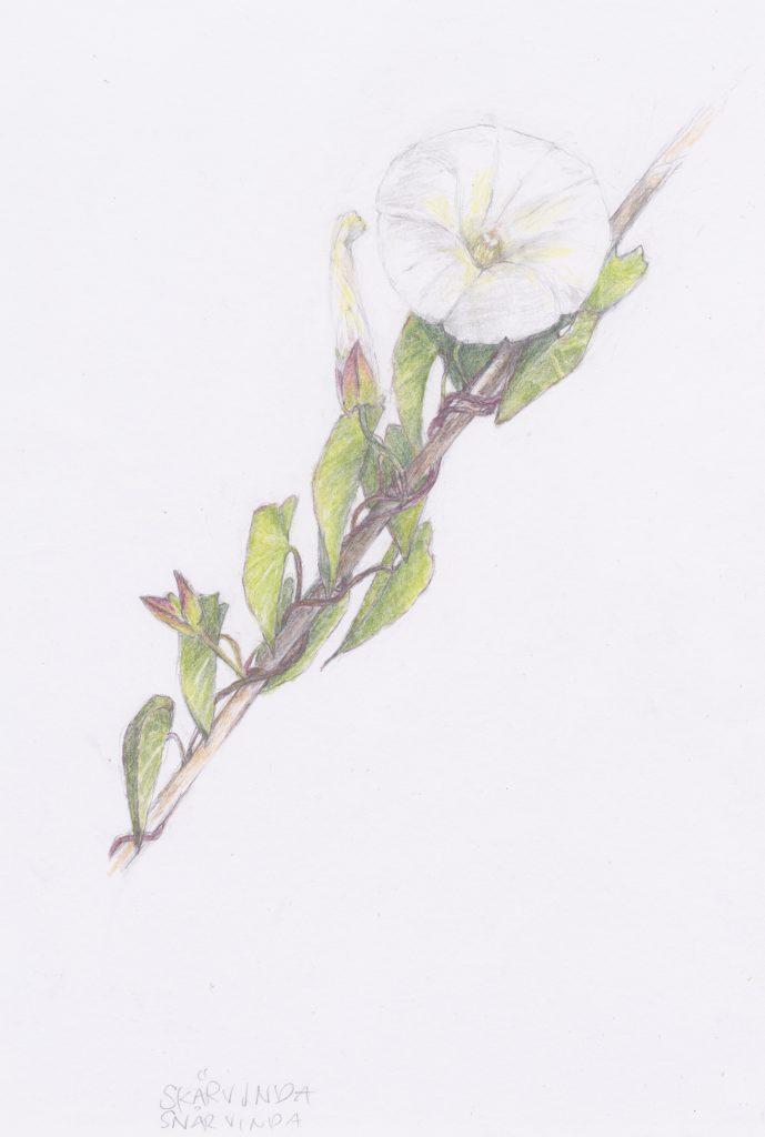 Tecknad blomma