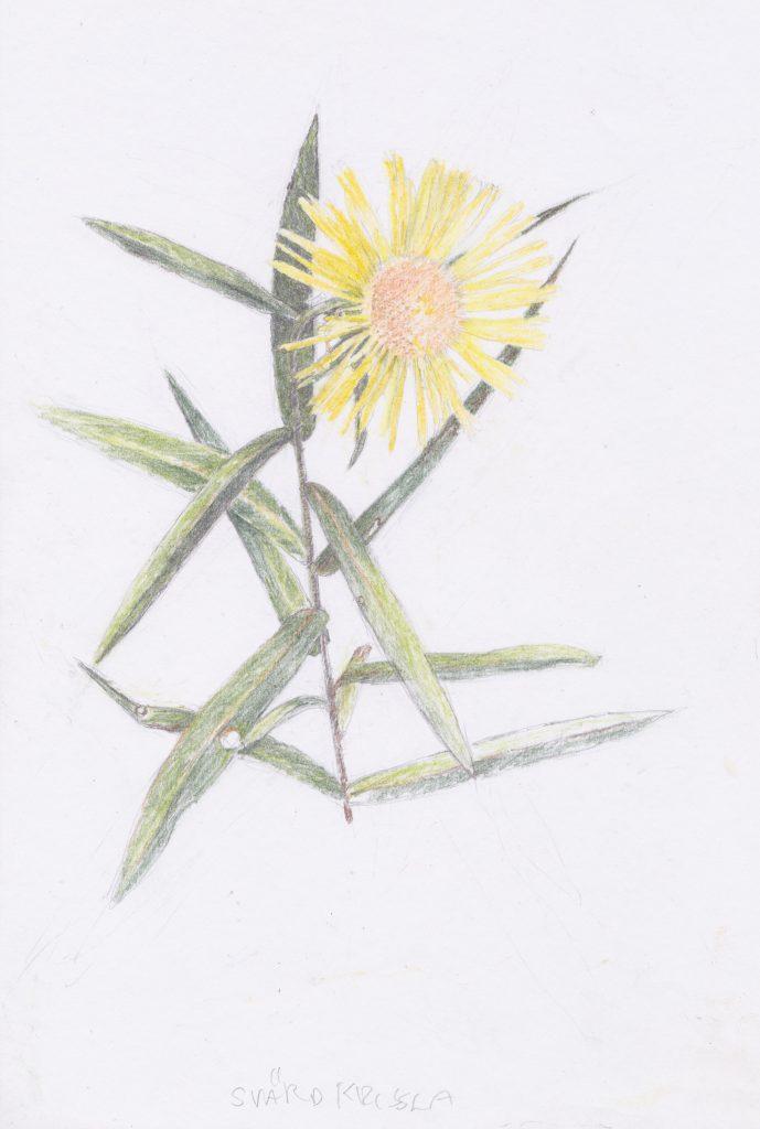 Tecknad blomma.